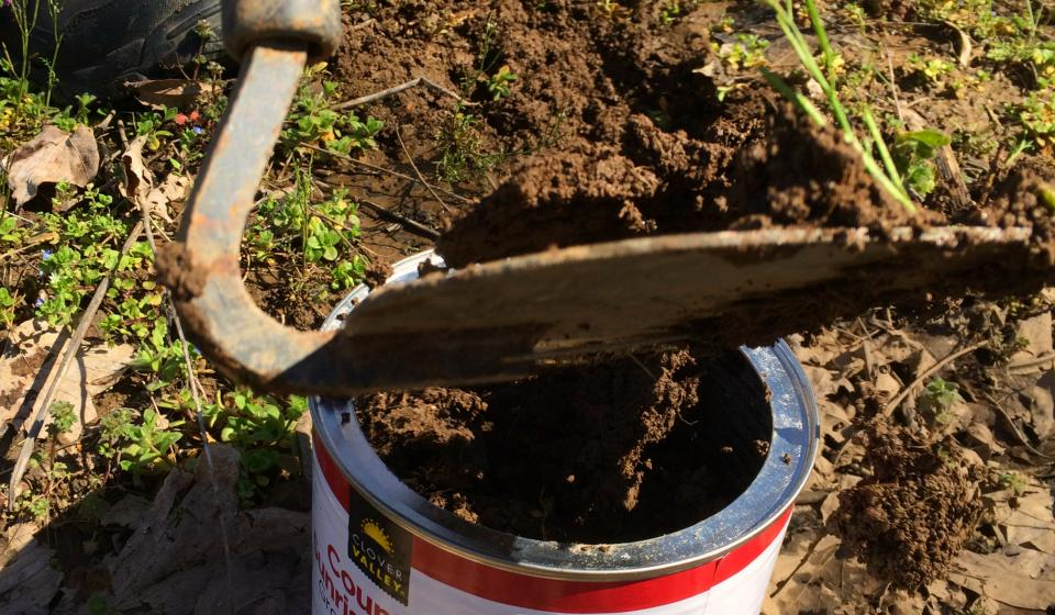 Picture of soil sample