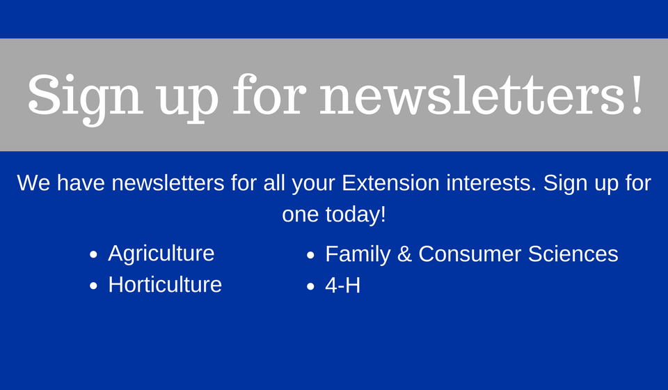 newsletter sign up survey